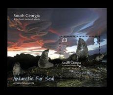 South Georgia 2018 Mih. 718 (Bl.30) Fauna. Antarctic Fur Seals MNH ** - South Georgia