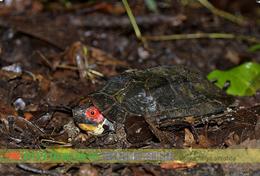 T19-66 ] Turtle Testudine  Tortoises  Terrapins , China Pre-stamped Card,postal Stationery - Turtles