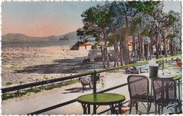 66. Pf. ARGELES-SUR-MER. La Plage Et Les Pins Vus De La Terrasse De L'Hôtel. 1 - Argeles Sur Mer