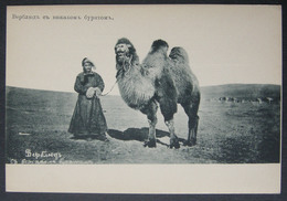 Russia Transbaikalia Siberia Siberian Types Buryats A Camel With A Buryat Leader - Asie