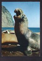 CPSM GROENLAND - Elephant De Mer - TB PLAN - CP Publicité IONYL - Timbres GRONLAND - TB Oblitération Verso - Greenland
