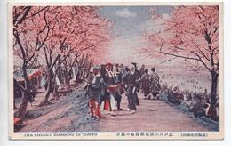 THE CHERRY BLOSSOMS IN TOKYO - Tokyo