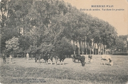 MOERBEKE WAAS  Zicht In De Weiden - Moerbeke-Waas