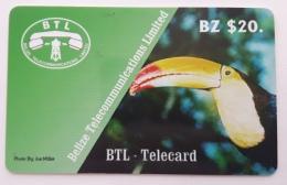 Belize ,Bird - Belize