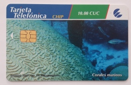 Corales Marinos - Cuba