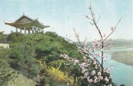 COREE DU NORD  R.P.D.C.  :  PYONGYANG  :  Printemps De La Colline De Mankyeung-Bong - Corée Du Nord
