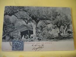L3 766 CPA. TUNISIE. CAMPEMENT SOUS LES OLIVIERS. ANIMATION (+ DE 20000 CARTES A MOINS 1 EURO) - Tunesien