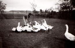 Photo Originale Ferme & Fermière - L'éleveuse D'Oies En Toute Confiance Pour L'engraissage Des Anatidés - 1945 - Métiers