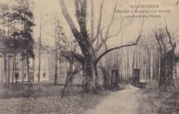 Maldegem, Maldeghem, Kasteel Boesinghe Met De Eeuwenoude Linden (pk45031) - Maldegem