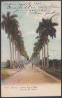 POS-910 CUBA POSTCARD. 1901. HAVANA, ROYAL PALM AVENUE TO FRANCE. USED. - Cuba