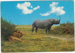 RHINO And LION - East African Wild Life - Kenya - Kenia