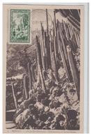 MONACO -- LE JARDIEN EXOTIQUE -- CARTE MAXIMUM -- 1949 -- - Jardin Exotique