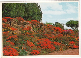 Caledon - The Wild Flower Park In October - South Africa - Zuid-Afrika