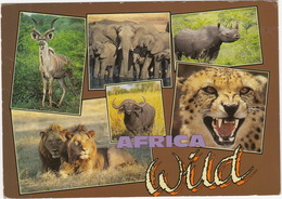 Africa Wild: Lion, Kudu, Buffalo, Elephant, Cheetah & Rhinoceros  - South Africa - Zuid-Afrika