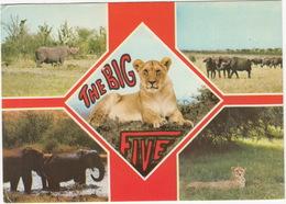 Wildlife - East Africa - The Big Five  - Kenya - Kenia
