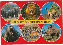 Southern Africa Wildlife; Elephant, Lion, Giraffe, Baboon, Zebra, Impala, White Rhino - Zuid-Afrika