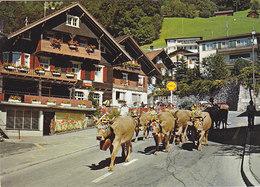 Liechtenstein - Alpabtrieb , Cow Kuh - Liechtenstein
