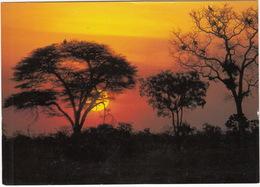 Bushveld Sunset / Bosveld Sonsondergang - South Africa - Zuid-Afrika