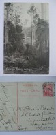 AUSTRALIA - Gilderoy Ranges Victoria - 1912 Pre-paid George V - Sent To London England - Australia