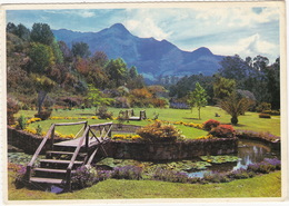 George, Cape Provence - Van Riebeeck Gardens  - South Africa - Zuid-Afrika