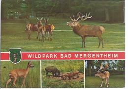 Bad Mergentheim - Wildpark - Mehrbild (4)- Werbekarte  **AK-90817** - Bad Mergentheim