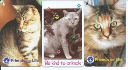 3 Télécartes Singapour Animal Chat Cat Chats  (D 434) - Hongrie