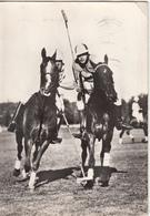 Chevaux - Jeu De Polo - Paarden