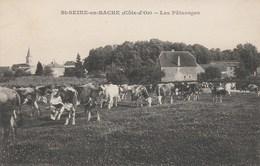 Saint-Seine-en-Bâche - Les Pâturages - France
