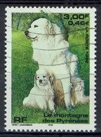 France, Pyrenean Mountain Dog, 1999, VFU - Frankreich