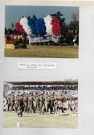 40 Photos Surin éléphant Photo Véritable ( No CP ) Thaïlande - Siam - Souvenir De Voyage 1989 Bien Lire Descriptif - Thaïlande