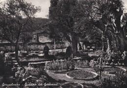 CARTOLINA - POSTCARD - ISRAELE  - JERUSALEM - GIARDINO DEL GETSEMANI - Israele