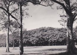 CARTOLINA - POSTCARD - INDIA - THE BANYAN TREE CALCUTTA - India