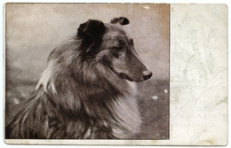 GLASGOW : CATHCART - MOUNT FLORIDA SCHOOL - ATTENDANCE CARD, 1907 / ROUGH COLLIE DOG - Lanarkshire / Glasgow