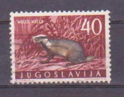 66-669 / YUGO - 1960  YUGOSLAVIAN  FAUNA - ANIMALS  Mi 922 O - 1945-1992 Socialist Federal Republic Of Yugoslavia