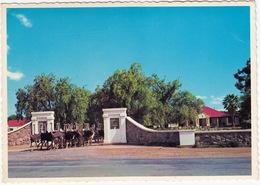 Oudtshoorn: OSTRICHES / VOLSTRUISE / STRUISVOGELS  - Highgate Ostriche Farm / Volstruisplaas - South-Africa - Zuid-Afrika