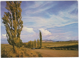 Rural Scene, O.F.S. / O.V.S. 'n Landlike Toneel - South-Africa - Zuid-Afrika