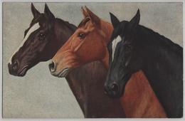 Pferde Horses Chevaux - Brauner Schwarzer Roter - 946 - Chevaux