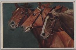 Edle Pferde Eatalons Light Showy Horses Chevaux - A. Koch - Chevaux