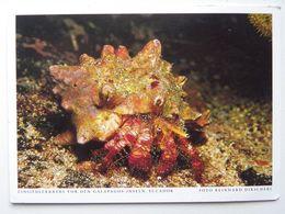 Crab / Galapagos Island - Pesci E Crostacei
