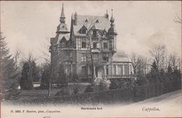 Kapellen Cappellen Hortensia Hof Kasteel Chateau Hoelen Geanimeerd (zeer Goede Staat) 1693 ZELDZAAM 1909 - Kapellen