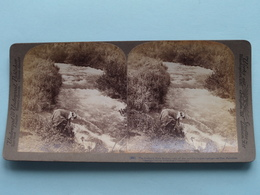 The Jordan's Main Source, Palestine ( N° 88 ) Stereo Photo : Underwood & Underwood Publi ( Voir Photo ) ! - Stereoscopic