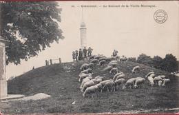 Geraardsbergen Grammont Le Sommet De La Vieille Montagne Oudenberg Schaap Mouton Vlaamse Ardennen  (In Zeer Goede Staat) - Geraardsbergen