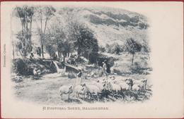 Old Postcard Pakistan India Balochistan Balughistan A Pastoral Scene Farmers - Pakistán