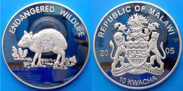 MALAWI 10 K 2005 PLACCATA ARGENTO PROOF WWF ENDANGERED WILDLIFE CHEVROTAIN MOUSE PESO 23,5g CONSERVAZIONE FONDO SPECCHIO - Malawi