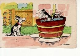 Chat Dans Un Baquet D'eau, Chien (illustration, Humour) - Contemporanea (a Partire Dal 1950)