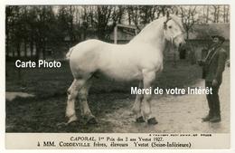 76 - Caporal 1er Prix Des 2 Ans Yvetot 1927 à MM.Coddeville Eleveurs à Yvetot - Elevage