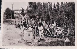 HAMMAM-RIGHA Aïn Tolba - Algeria