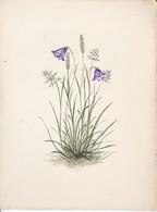 Glockenblume Und Gräser - Handzeichnung Mischtechnik - Unikat - Ca. 1940/50 (33798) - Blumen