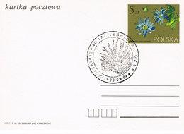 Polen Sonderstempel - Bialystok - Pflanze, Diestel ? - 1944-.... Republik