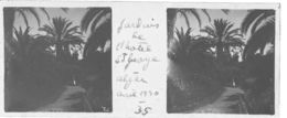 035 PP ALGERIE ALGER Jardins De L'Hôtel Saint Georges Avril 1930 - Glass Slides